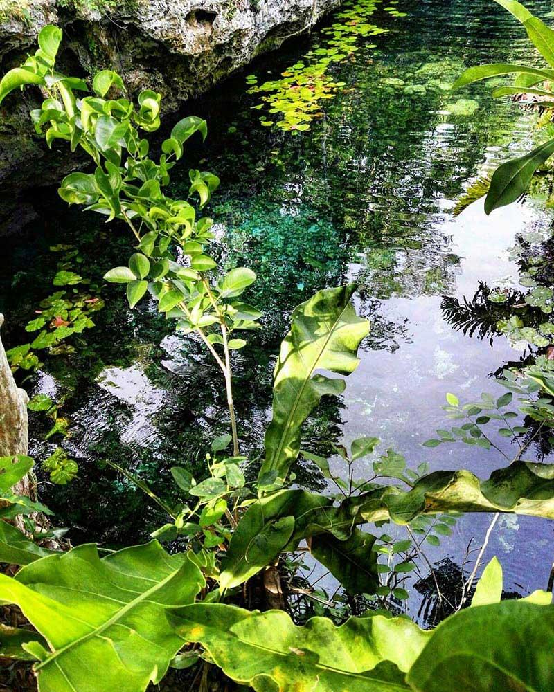 El momento presente y la naturaleza tropical