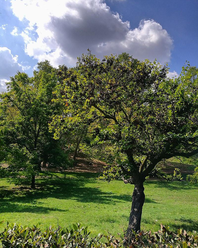 villa borghese and its nature