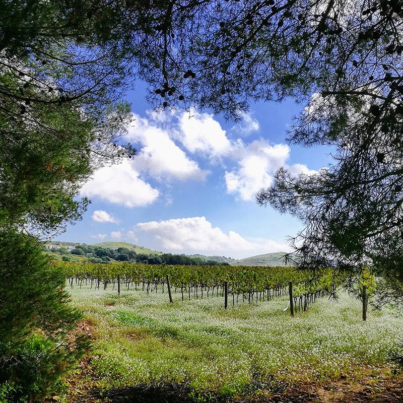 une promenade dans la nature et les vignes