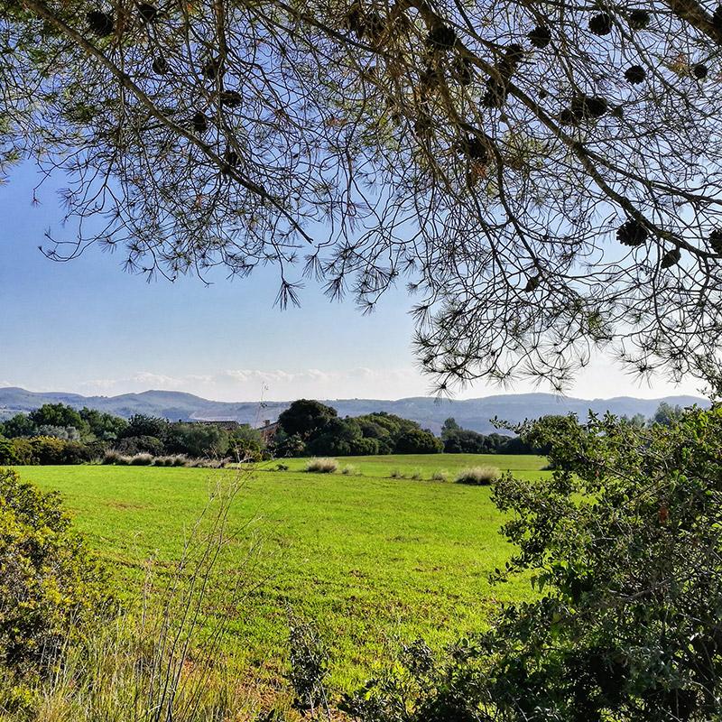 pasear por la naturaleza y los campos