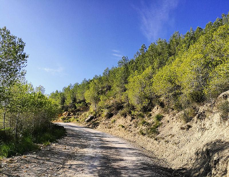 caminos por la naturaleza mediterránea