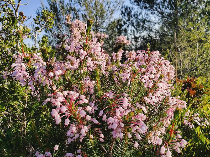 les fleurs dans une promenade dans la nature
