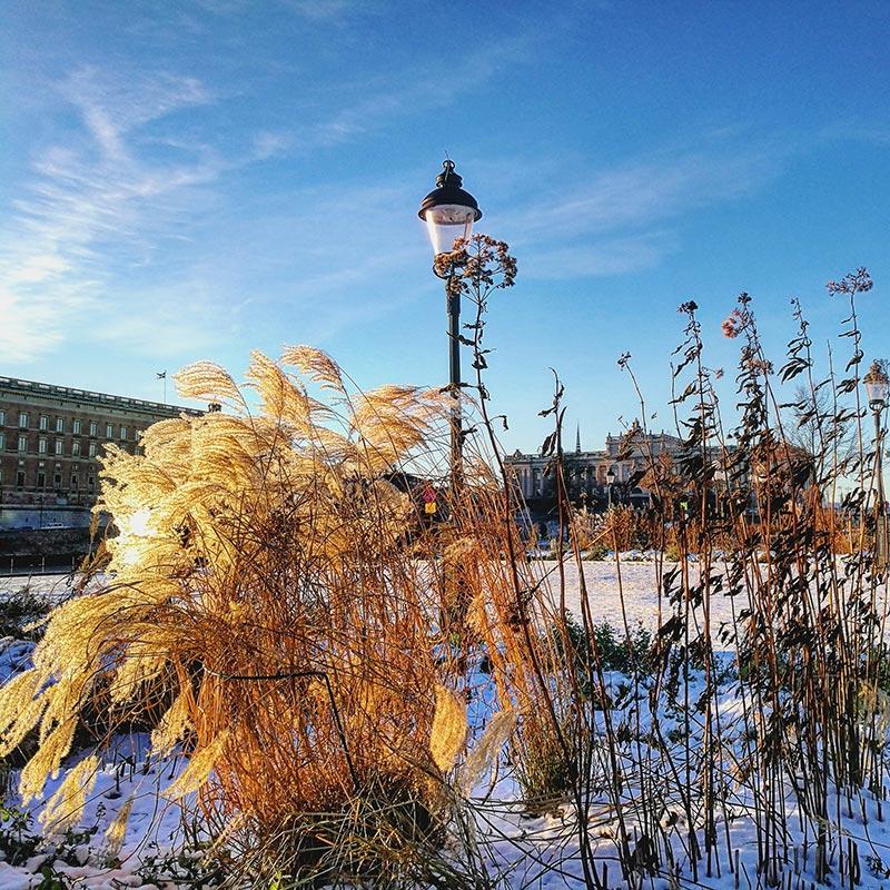Naturaleza blanca de Estocolmo