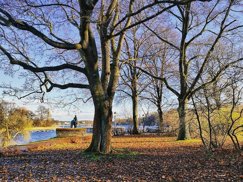 La naturaleza de Estocolmo en Otoño